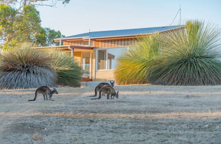 Ecopia Retreat kangaroos feeding - Exceptional Kangaroo Island Tours.