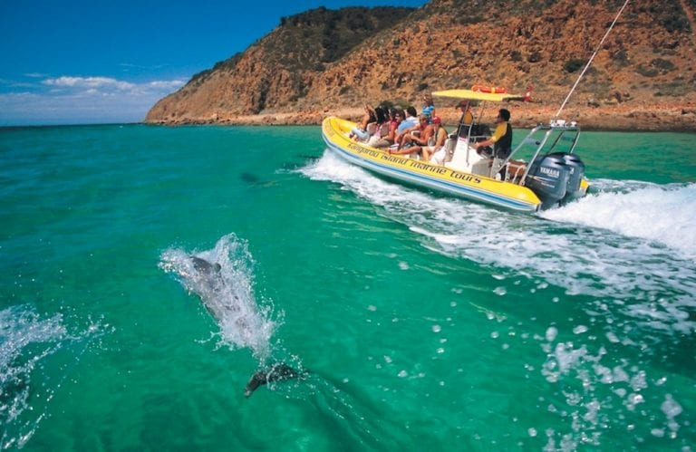 Dolphins with Kangaroo Island Marine Tours - Kangaroo Island